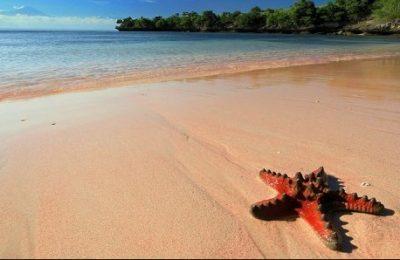 Objek Wisata PantaI Pink Paket Wisata Halal Lombok PantaI Pink